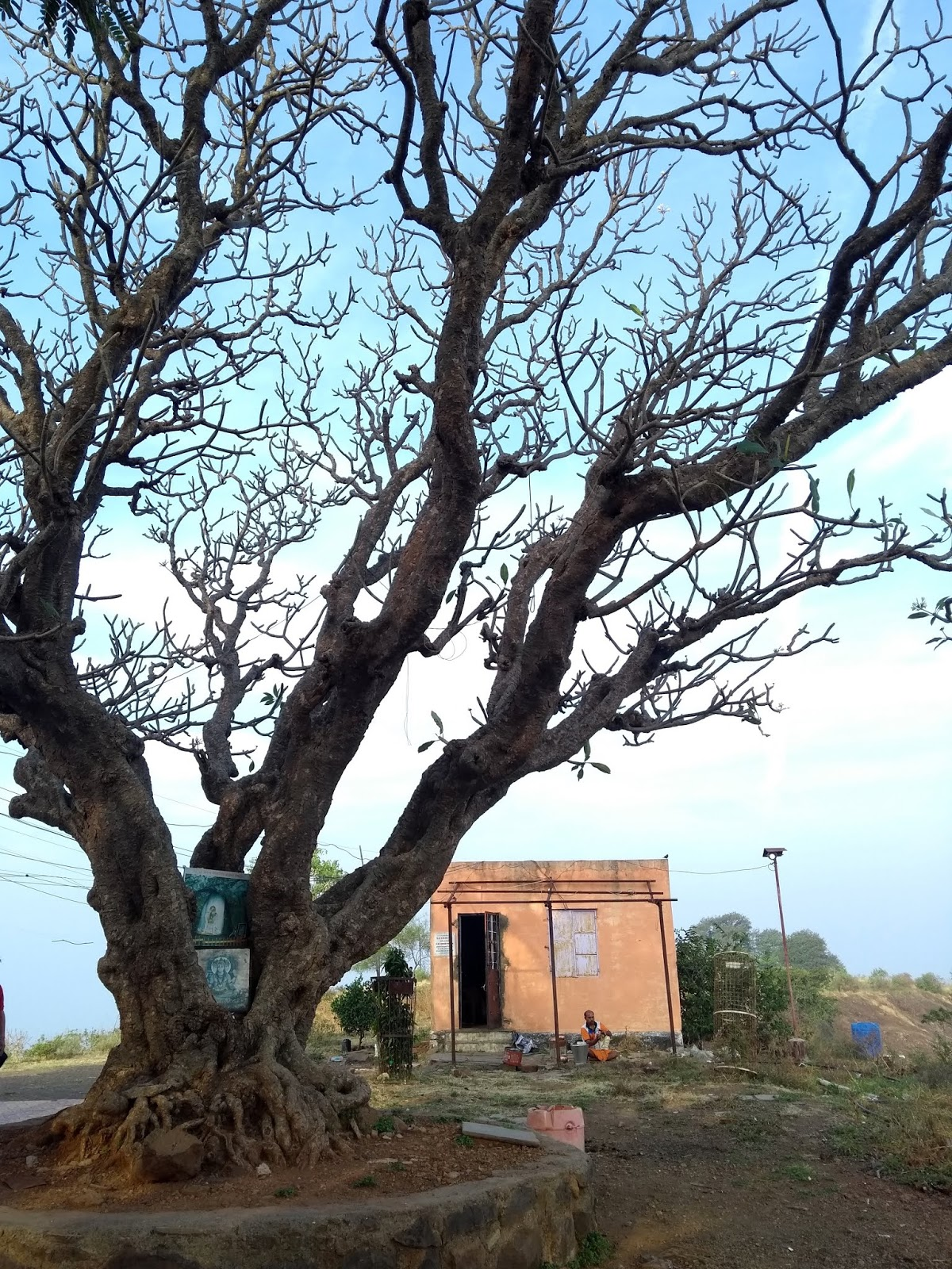 Chafa, Karad, Temple Tree