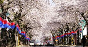 Semarak Festival Pemikat Wisatawan Ke Korea