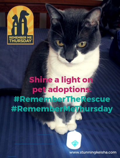 Shining a Light on Pet Adoption