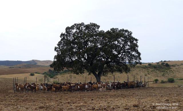 grandes-rutas-marinaleda-el-saucejo-eldeladahon.net