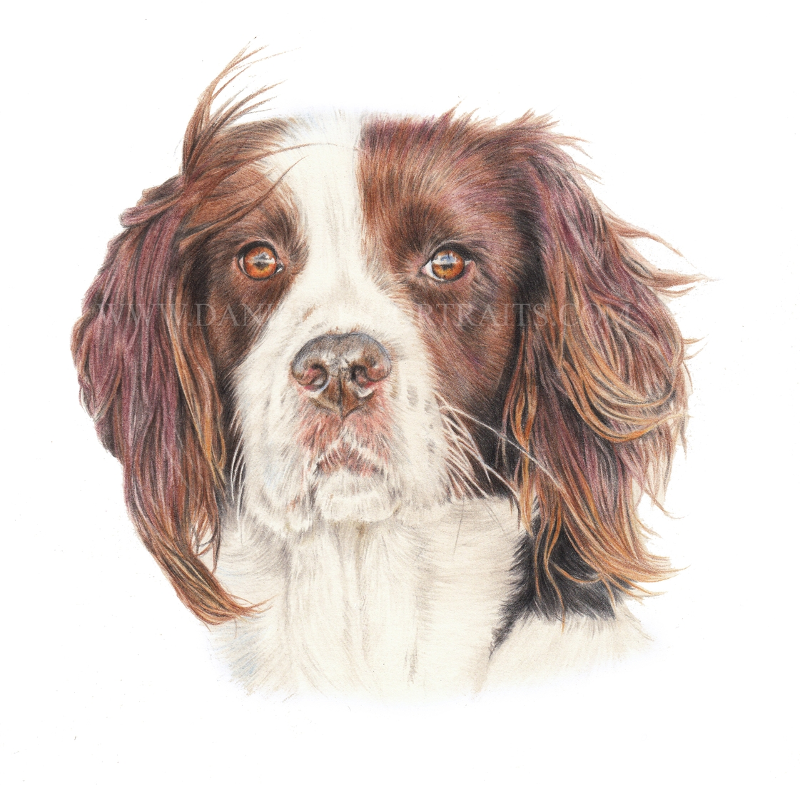 02-Lillie-Danielle-Fisher-Realistic-Pet-and-Wildlife-Portraits-www-designstack-co