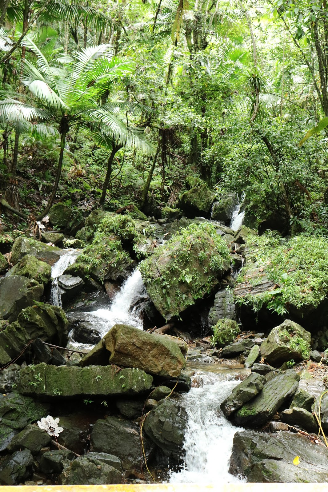 Baño Grande El Yunque:Back and Forth Across the Pond: El Yunque National Forest