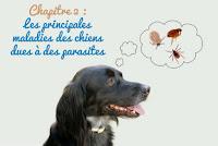 principales maladies transmises au chien
