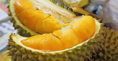 buah durian yang jatuh dari pohonnya dipengaruhi oleh gaya