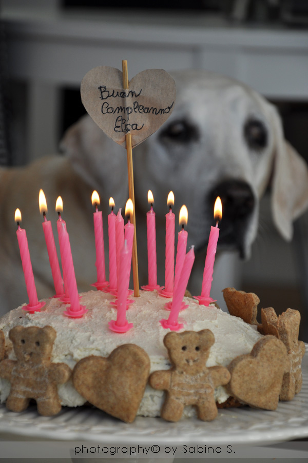 Due Bionde In Cucina Torta Di Compleanno Per Cani Con Biscottini