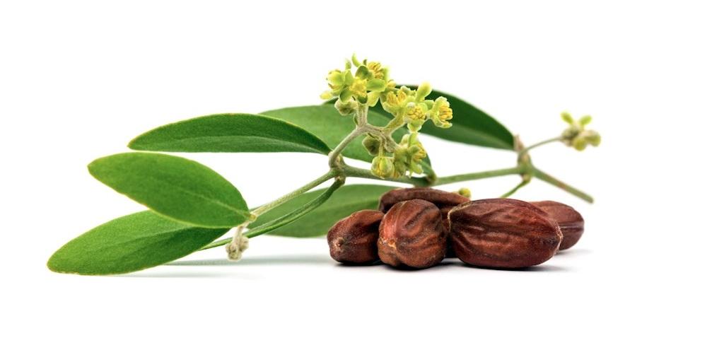 Propiedades aceite de jojoba