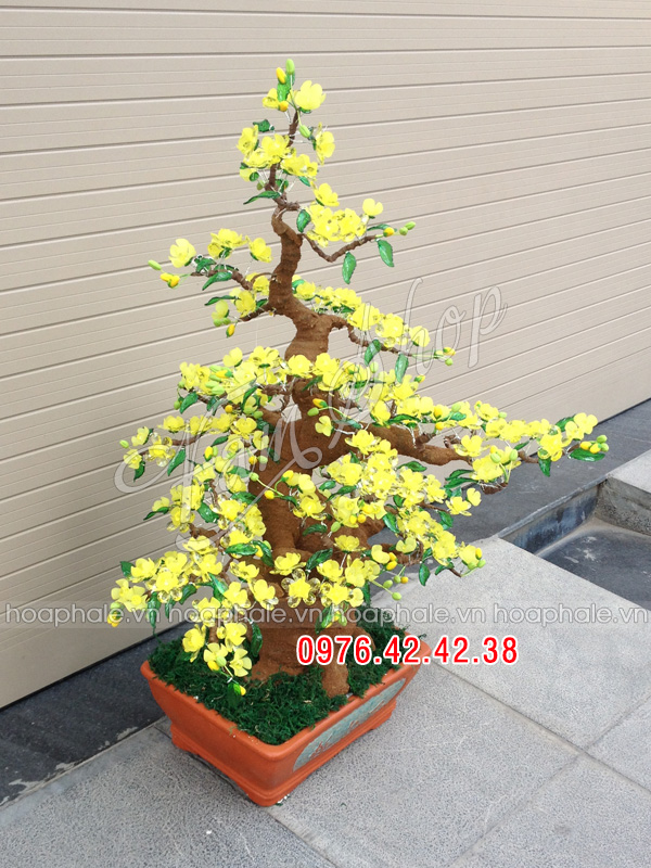 Goc bonsai cay hoa mai tai Phan Van Truong