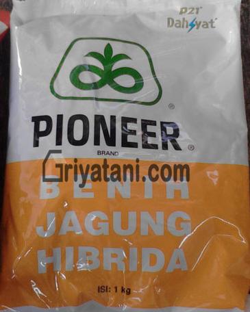 Jagung Pioneer