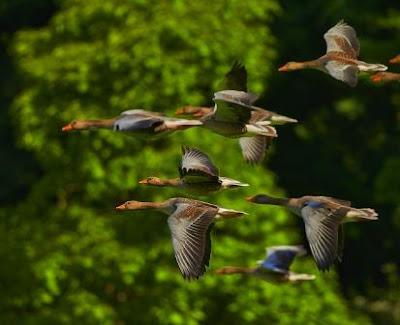 Birds of Pobitora wildlife Sanctuary