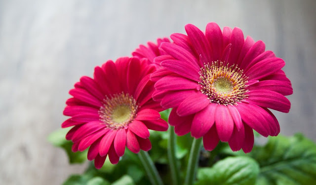 https://2.bp.blogspot.com/-r06TS4nuLGc/V62TFKtOhZI/AAAAAAAAABo/0MzDv5GFR204iUHCuGHAhPkFSh7UFwD6gCLcB/s640/flower-631765_1920.jpg