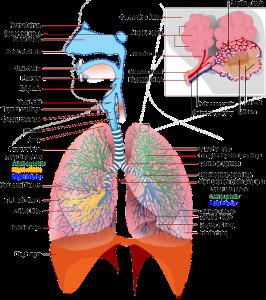 Penyakit Paru-Paru Karena Merokok