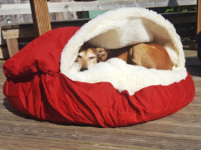Old dog sleeping in a warm dog bed