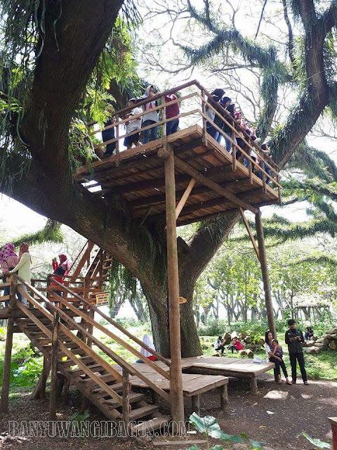 Rumah pohon di De Djawatan Benculuk