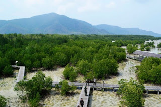 mangrove tracking karimunjawa