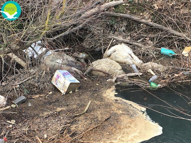 Πέταξαν νεκρά ζώα στον Κωκυτό ποταμό (+ΦΩΤΟ)