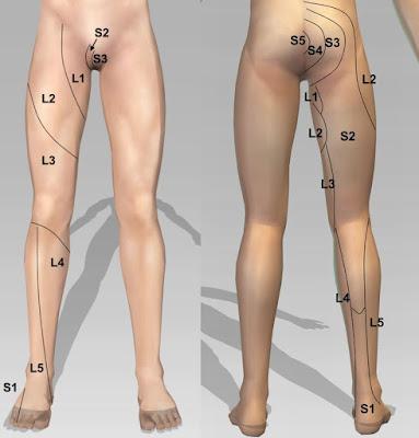 dermatome myotome area paha dan pantat