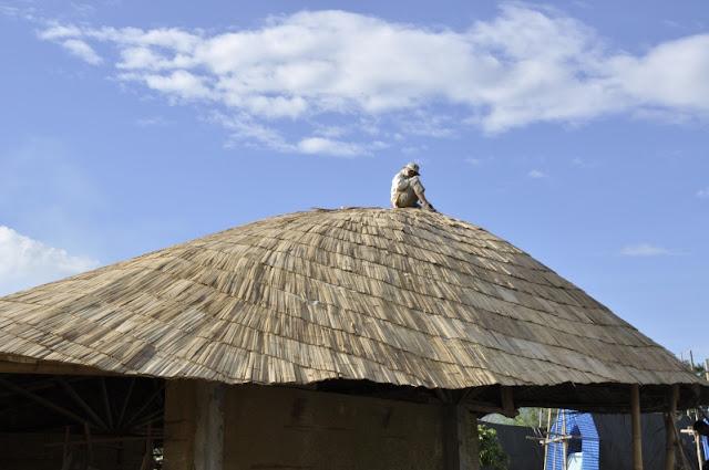 ตัวอย่างการมุงหลังคาไม้ไผ่