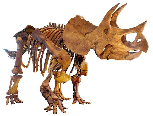 triceratops schelet