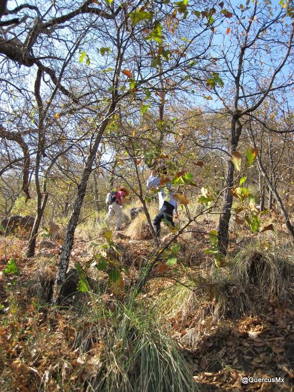 Ascendiendo la Sierra del Tecuán