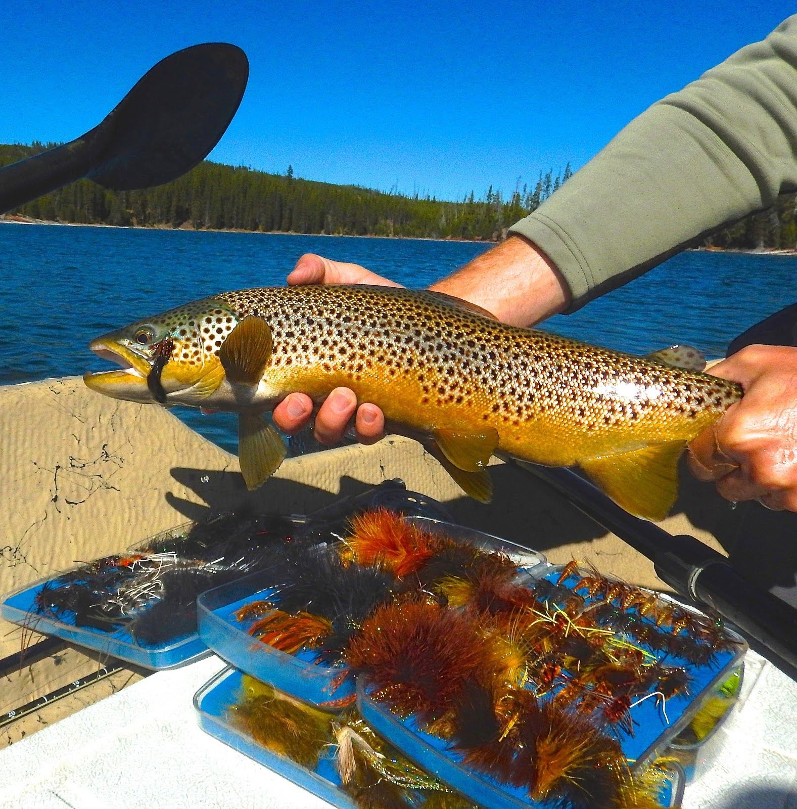 Jackson hole fly fishing report october 5 2016 for Jackson lake fishing report