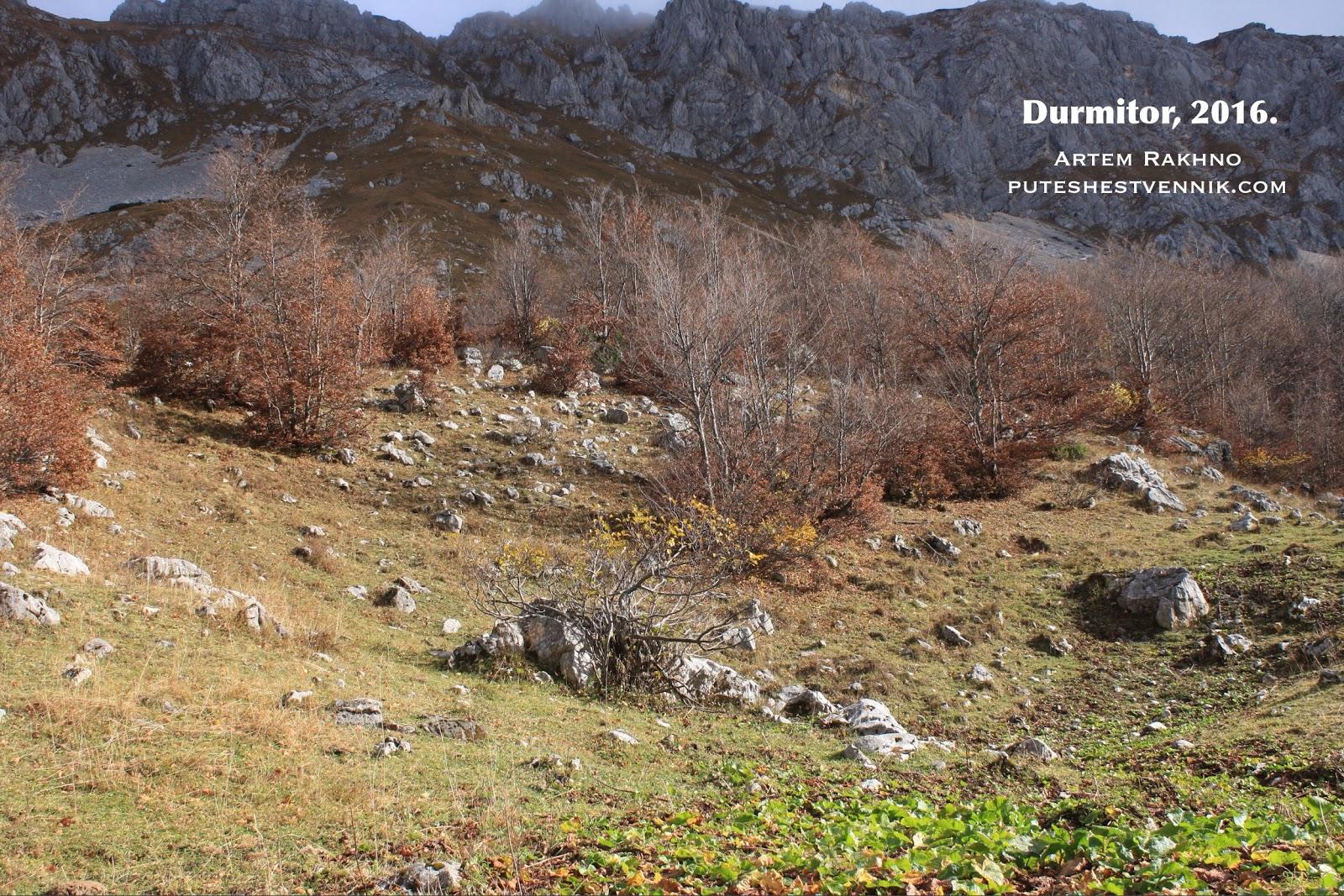 Деревья и горы в Дурмиторе