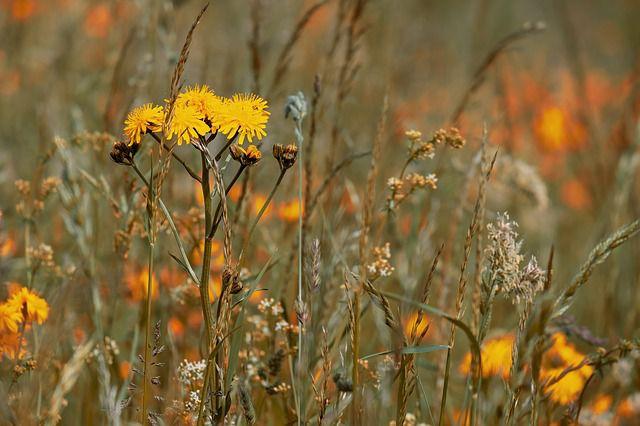 hoa dại đẹp nhất 6