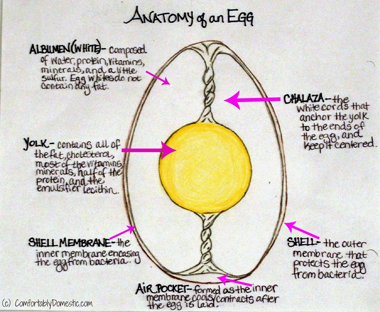 Did You Know This About Eggs