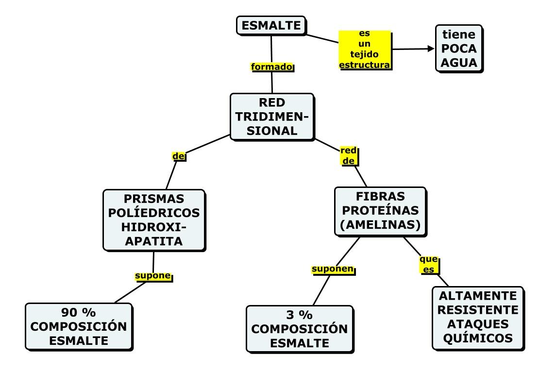 MAPAS CONCEPTUALES SOBRE LA ESTRUCTURA DIENTE (CONCEPTUAL MAPS ABOUT ...