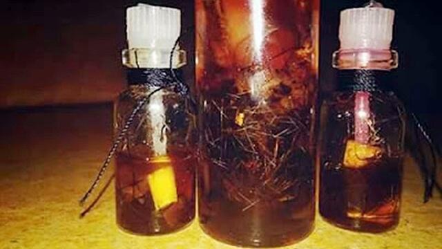 Cara Pembuatan Minyak Bulu Perindu Kalimantan