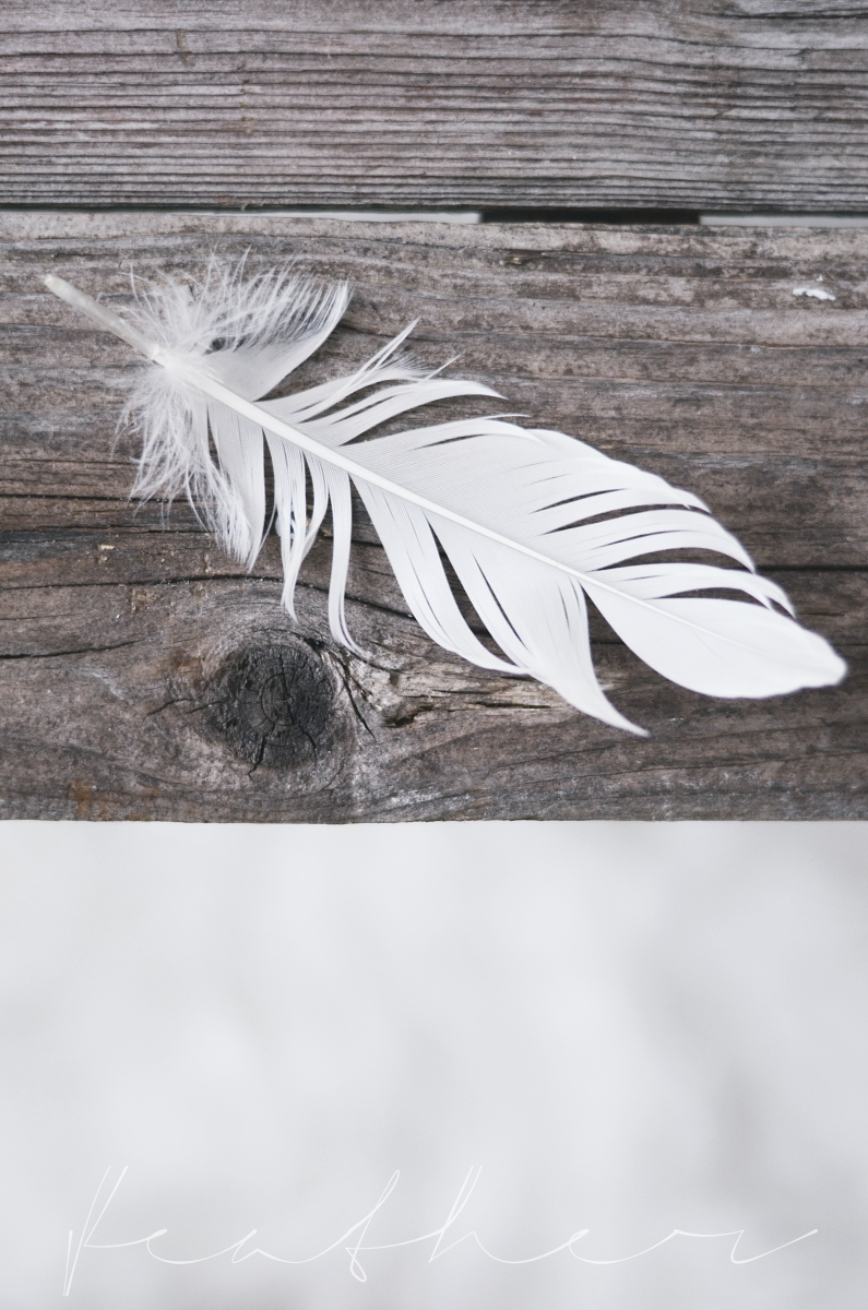 feather, quote, diy, drivved, snäckor, shells, shell, interior, bedroom