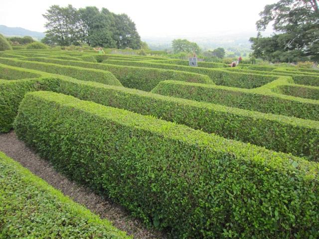 Explorando en el jard n jardines de nudos y laberintos - Plantas para hacer setos ...