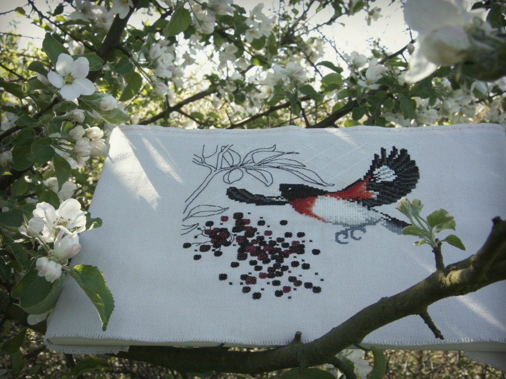 Rose - breasted grosbeak and elderberry - Valentina Sardu #1
