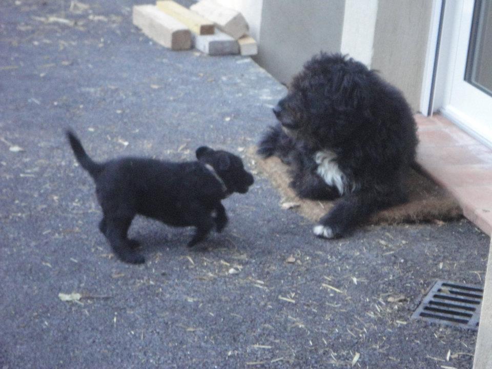 Image chien gratuit imprimer - Photo de chiot a imprimer ...