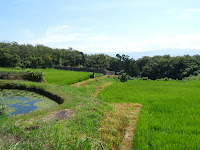 佐渡の田園風景