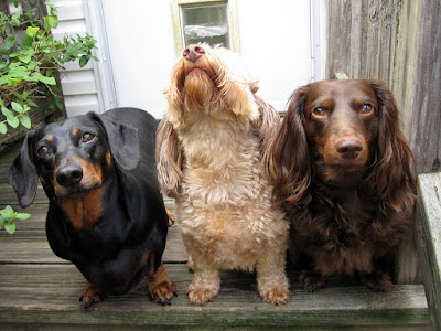 Choosing the Right Dog for You and Your Family