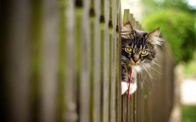 Foto van een kat op een hek