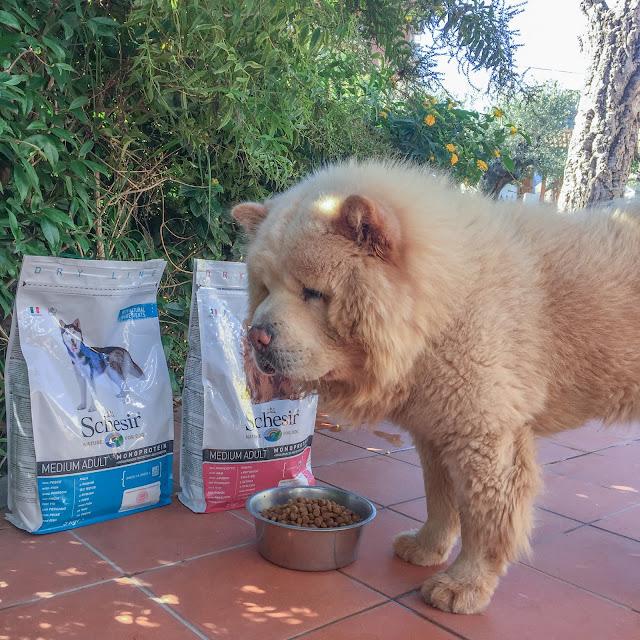 schesir alimento per animali
