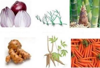 63 Contoh Gambar Hewan Generatif Dan Vegetatif HD Terbaru