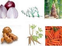 Perkembangbiakan Vegetatif & Perkembangbiakan Generatif + 18 Contohnya