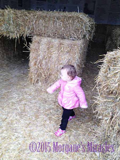 Visit to the Farm Area at the Minnesota Zoo hay maze