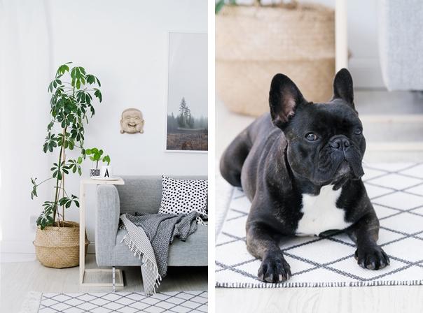 Wohnzimmer French Bulldog