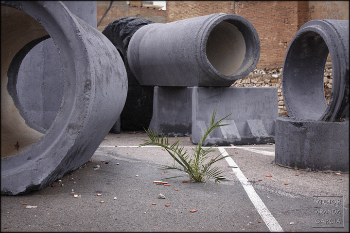 fotografia,naturaleza_urbana,valencia,palmera,asfalto,suelo