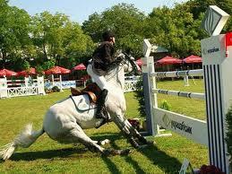 cavalo e altura de salto
