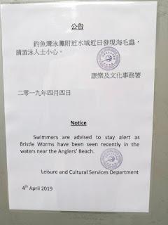 Hati-Hati Yang Suka Ngepantai, Pemerintah Umumkan 5 Pantai di Hong Kong Ini Terkena Ulat Laut Yang Mengerikan