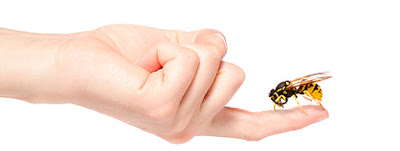 Alergia a los insectos