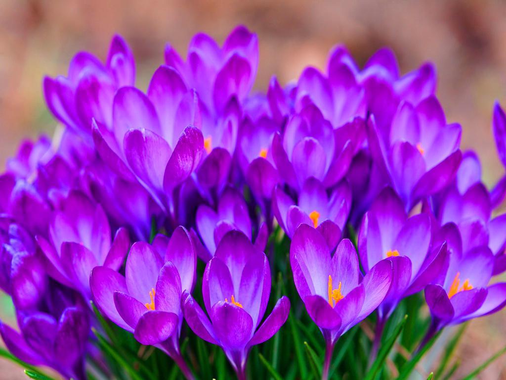 Purple Flower Wallpapers