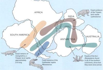 Formazione dei continenti | I ponti di terra