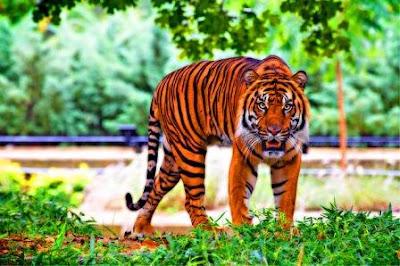 मानस राष्ट्रीय उद्द्यान (Manas national park in Hindi)