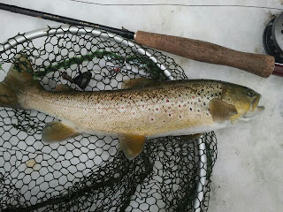 Brown trout streamer flyfishing
