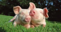 ¿Qué significa soñar con cerdos?